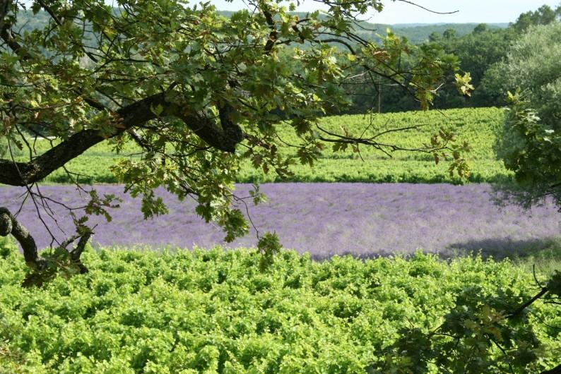 Location de vacances - Mas à Chantemerle-lès-Grignan - vignes et lavandes