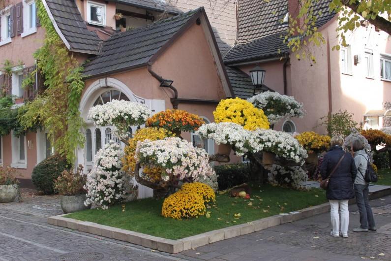 Location de vacances - Gîte à Nothalten - La fête des chrysantèmes à Lahr en Allemagne