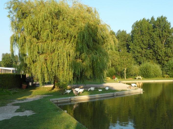 Location de vacances - Bungalow - Mobilhome à Berck - Etang