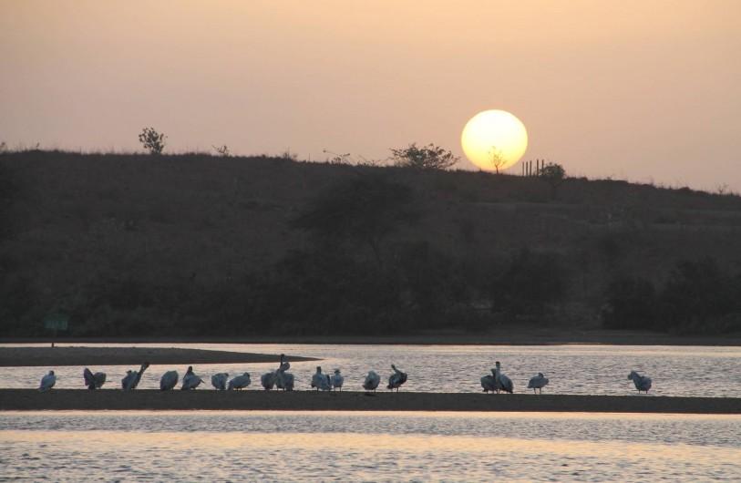 Location de vacances - Villa à Somone - Couché de soleil sur la lagune de Somone avec ses Pélicans.