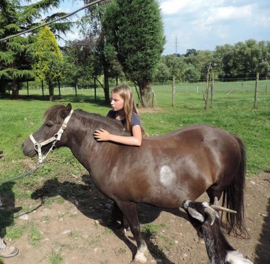 Location de vacances - Gîte à Lontzen - Le poney Finesse