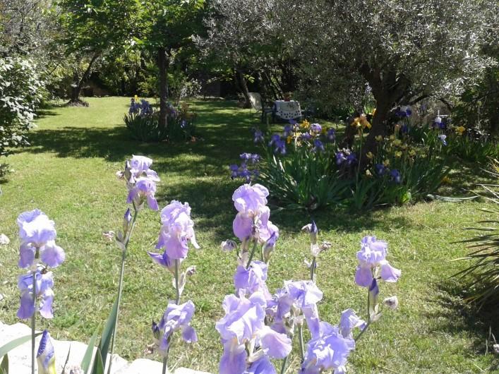 Location de vacances - Gîte à Nîmes - Plaisir visuel au milieu des nombreux iris