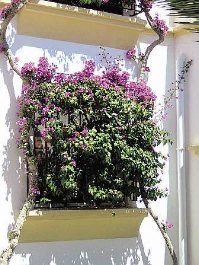 Location de vacances - Appartement à Torrevieja - Bougainvilliers