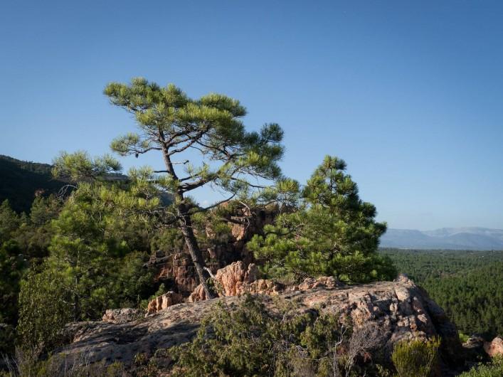 Location de vacances - Mas à Bagnols-en-Forêt - Les belles rendonnés