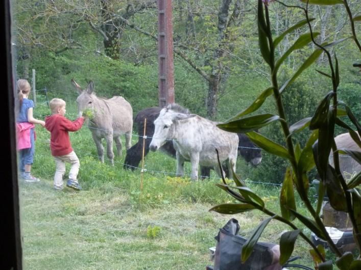 Location de vacances - Camping à Meyrueis - nous organisons des randos avec nos ânes:  journée ou plusieurs jours