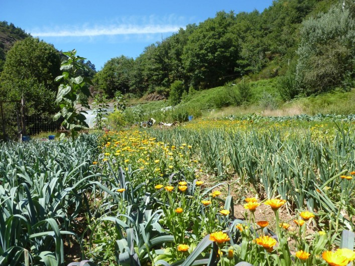 Location de vacances - Camping à Meyrueis - notre parcelle de maraichâge ,légumes bio de saison en vente directe