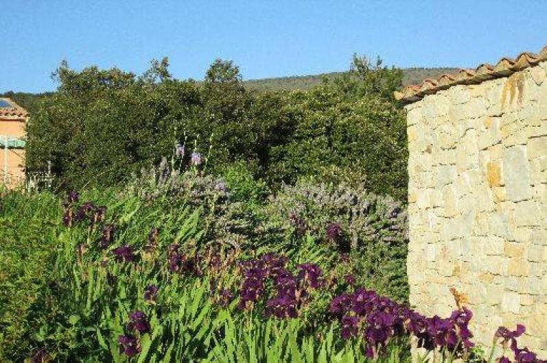 Location de vacances - Villa à Roche-Saint-Secret-Béconne - Les iris envahissent le jardin au printemps.