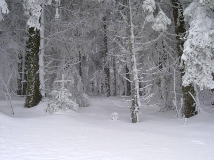 Location de vacances - Appartement à Orbey - Promenades en raquettes l'hiver