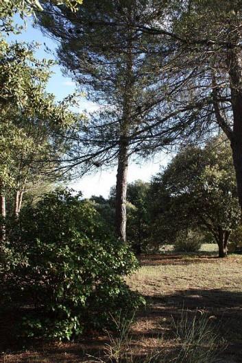 Location de vacances - Villa à Cucuron - Derrière la maison