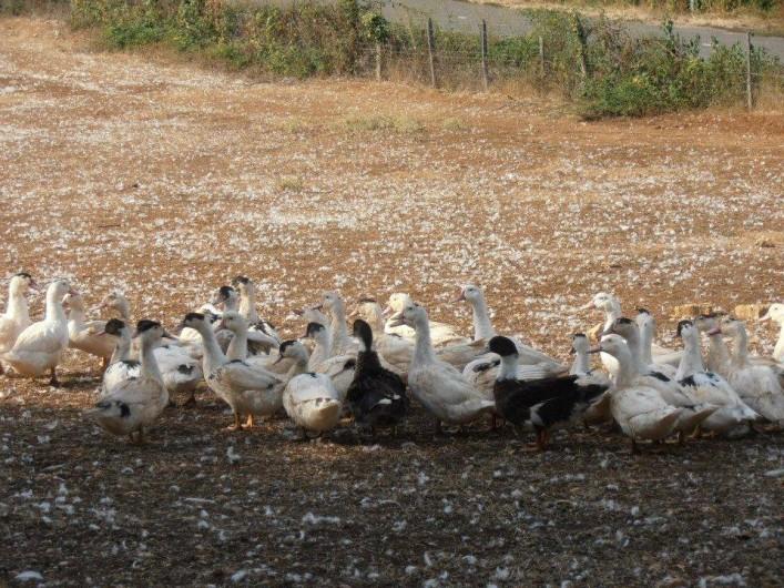 Location de vacances - Appartement à Cahors - Le pays du canard