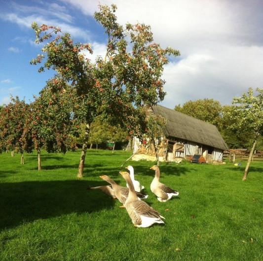 Location de vacances - Maison - Villa à Manneville-la-Pipard - LES ANIMAUX