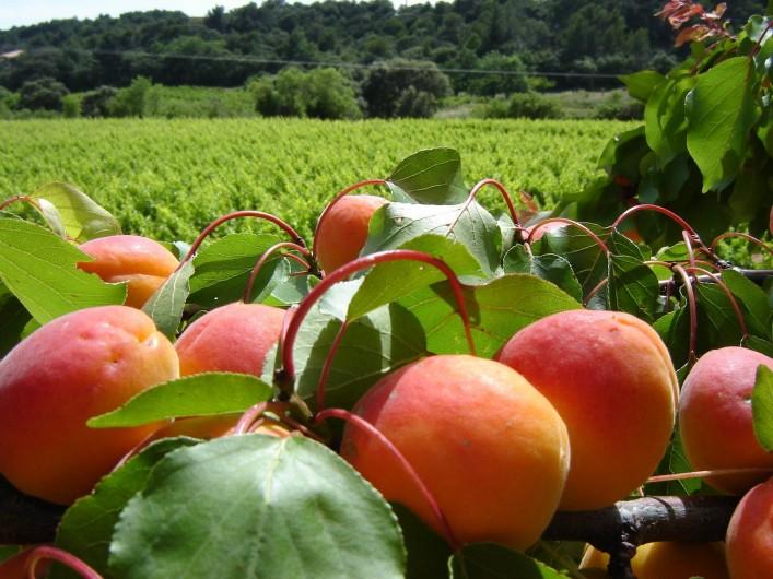 Location de vacances - Appartement à Le Barroux - Vignes et abricots