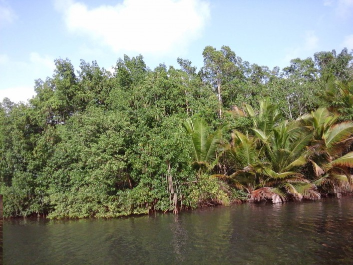 Location de vacances - Villa à Morne-À-l'Eau - La mangrove du canal de Décostière