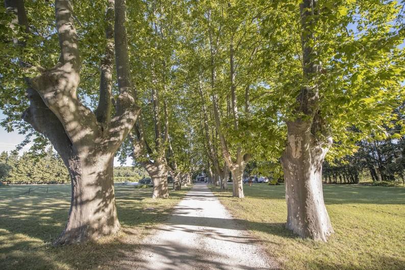 Location de vacances - Mas à Grillon - Entrée au Mas avec l'allée de platanes de plus de 400 ans