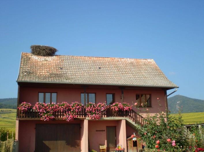 Location de vacances - Gîte à Hunawihr