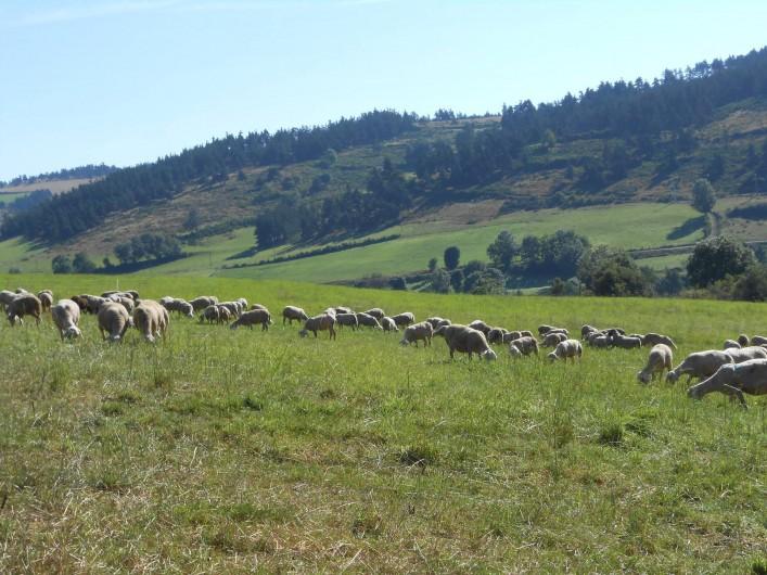 Location de vacances - Maison - Villa à Saugues - L'environnement immédiat