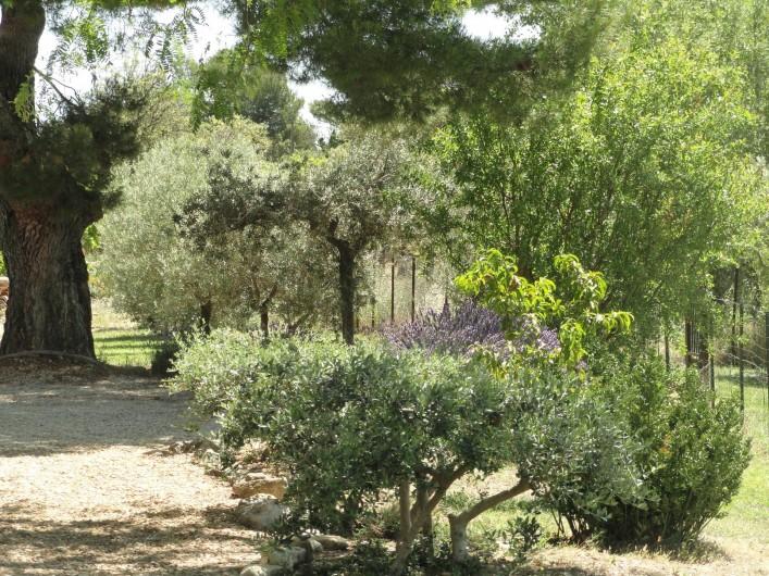 Location de vacances - Gîte à Cucuron - L'extérieur