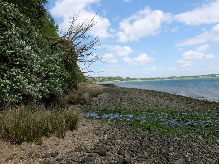 Location de vacances - Chalet à Plouër-sur-Rance - La mer (la rance ) a marée basse en bas de la maison