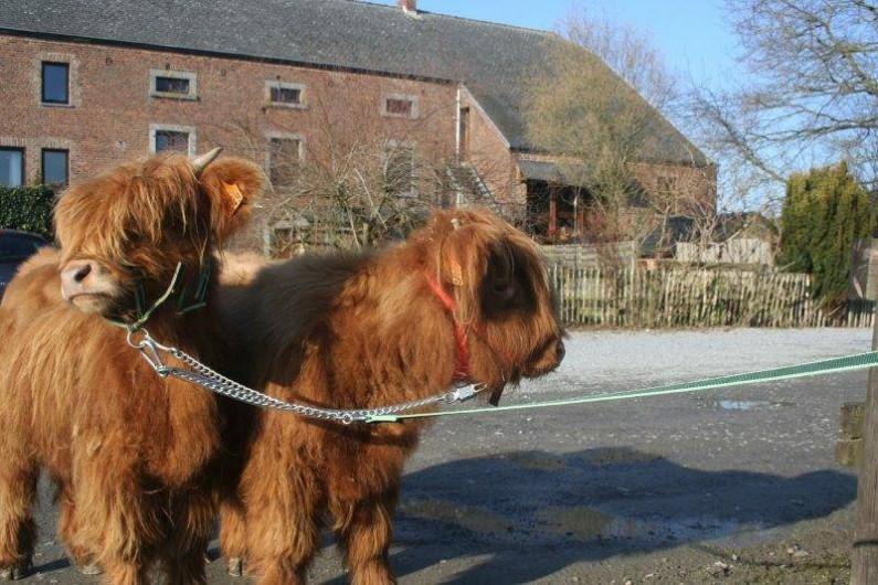 Location de vacances - Gîte à Durbuy - 2 de nos vaches Maggie et Aglaée