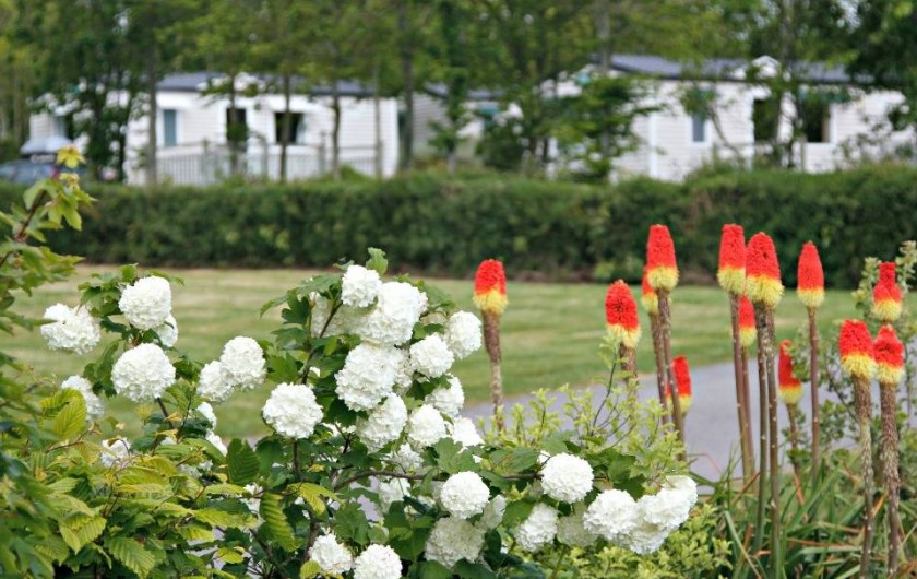 Location de vacances - Camping à Sarzeau - Ambiance végétale.Camping 100 % nature
