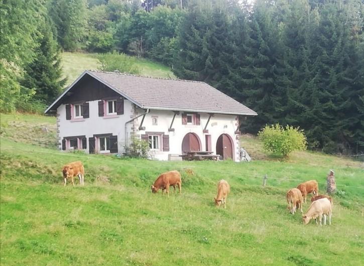 Location de vacances - Maison - Villa à Gerbépal - Ferme entière 8 pers tous confort