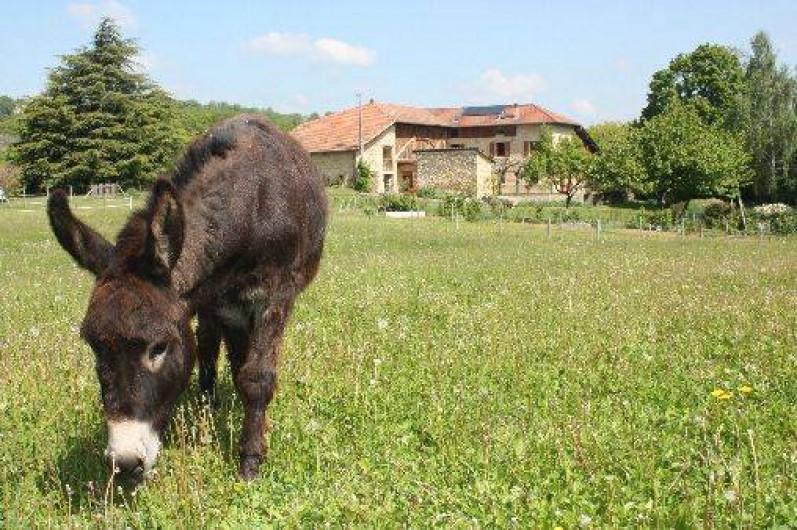 Location de vacances - Chambre d'hôtes à Saint-Lattier - l'âne Cacao dansson pré