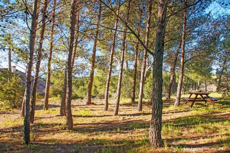 Location de vacances - Gîte à La Livinière - Bois de pin derrière le gîte