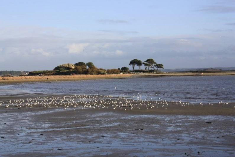 Location de vacances - Gîte à Saint-Pol-de-Léon - les oiseaux à marée basse en hiver