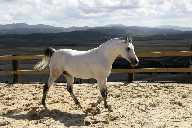 Location de vacances - Villa à Benalup-Casas Viejas - Equitation à 350 m