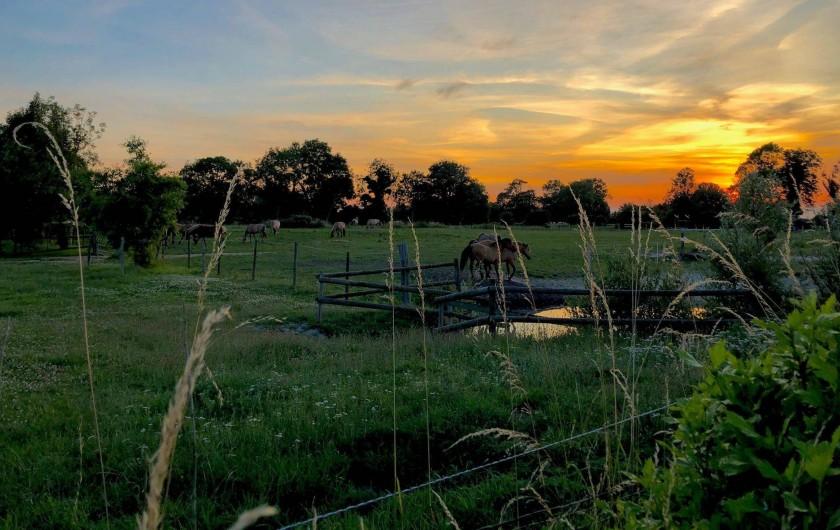 Location de vacances - Gîte à Ponthoile - Coucher de soleil sur les pâtures devant lse gîtes