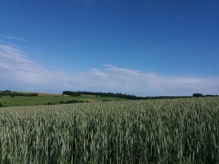 """Location de vacances - Gîte à Haut-Fays - Gîte """"La Maison"""" (10 p.) terrasse pouvant accueillir vos 20 convives"""
