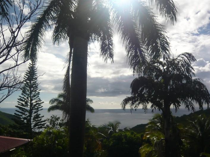 Location de vacances - Gîte à Pointe Noire - Vue du jardin