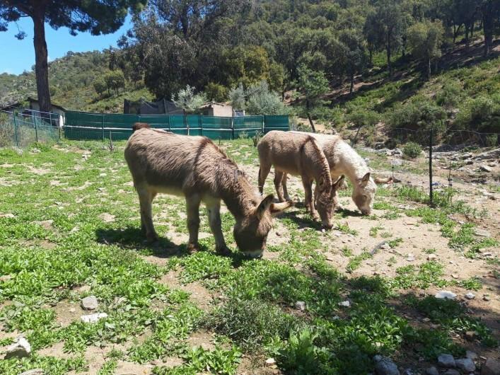 Location de vacances - Mas à Sainte-Maxime - les ânes