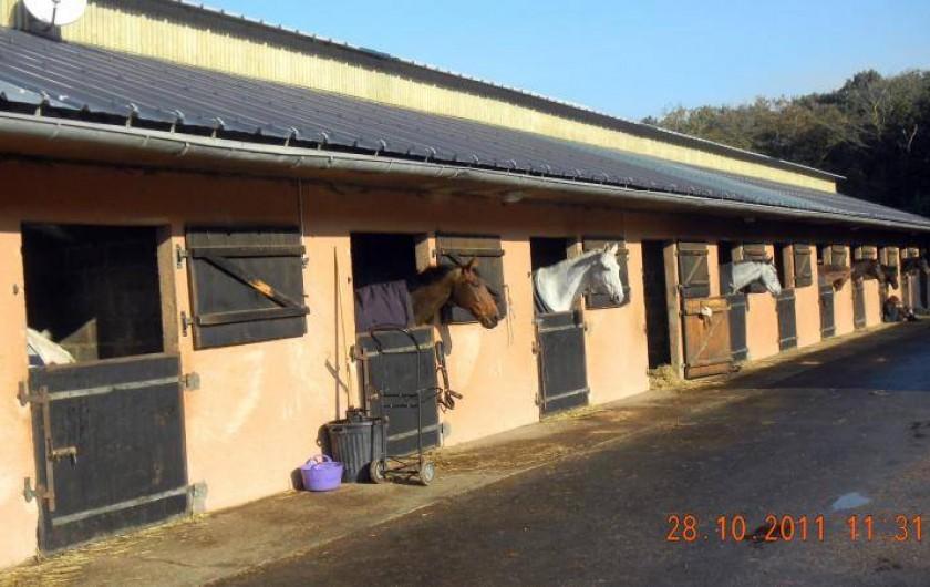 Location de vacances - Appartement à Villerville - promenade a cheval