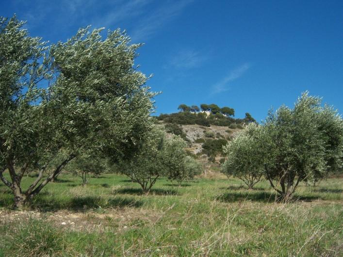 Location de vacances - Gîte à Montpeyroux - oliveraie