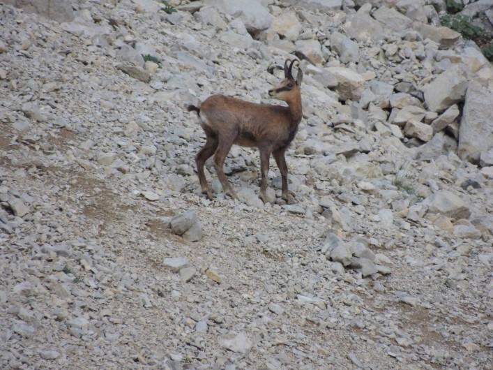Location de vacances - Chalet à Veynes - observation des animaux lors des randonnées accompagnées