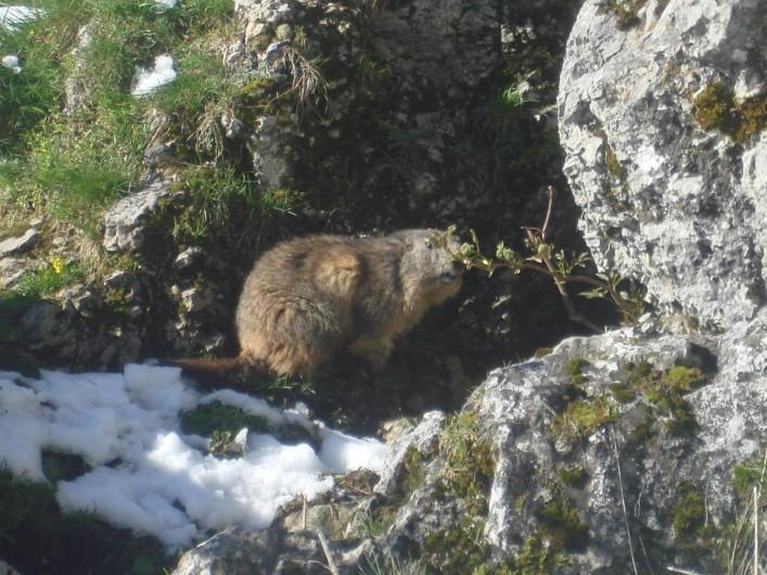 Location de vacances - Gîte à La Plagne - une marmotte