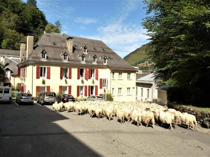 Location de vacances - Appartement à Eaux-Bonnes - retour de transhumance