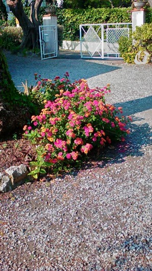 Location de vacances - Villa à Antibes - Un instant fleuri