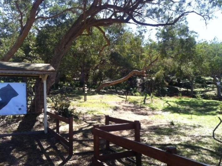 Location de vacances - Chalet à Le Tampon - Proximité d'un sentier botanique