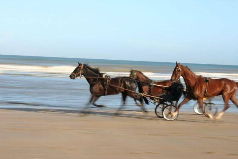 Location de vacances - Appartement à Cabourg - chevaux sur la plage
