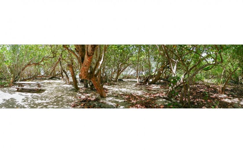 Location de vacances - Villa à Sainte-Anne - Sous bois idéal pour manger à l'ombre au bord de la plage.
