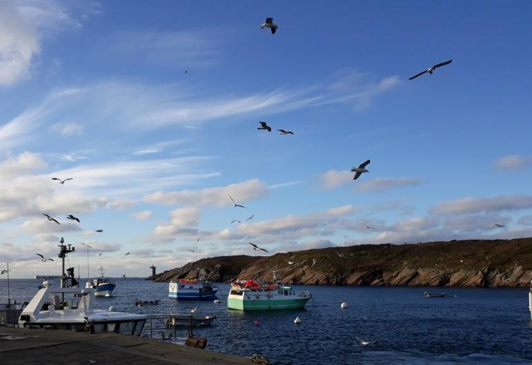Location de vacances - Gîte à Brélès - Le port de pêche du Conquet..et embarcadère pour les îles