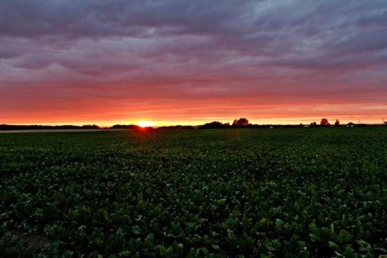 Location de vacances - Gîte à Saint-Martin-aux-Buneaux - Vue  de la terrasse du soleil couchant sur champ de lin