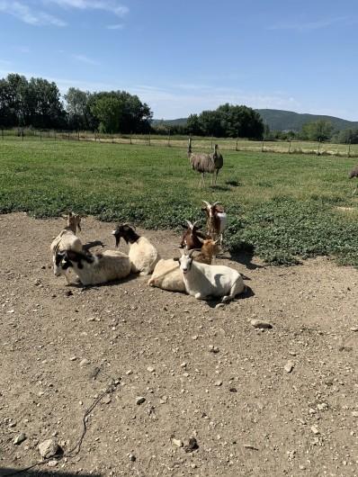 Location de vacances - Mas à Villelaure - parc d'animaux juste à côté de la ferme : chèvres, émeus, cochons, ânes…