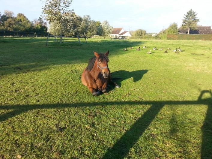 Location de vacances - Gîte à Rue - Pâture pour chevaux de 1hectare 200
