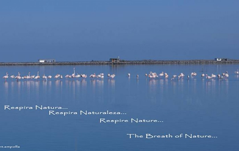 Location de vacances - Chalet à Amposta - Parc naturel (plages, observation d'oiseaux, velo, navigation, etc.)