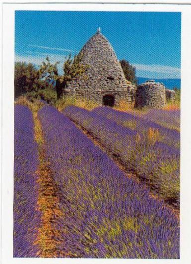 Location de vacances - Villa à Apt - Borie dans le grand Luberon avec son champ de lavande
