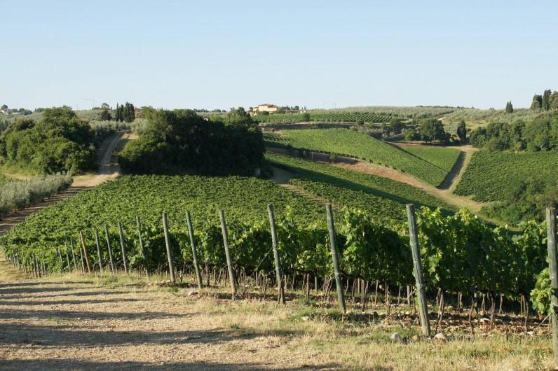 Location de vacances - Chalet à San Casciano in Val di Pesa - Our vineyards