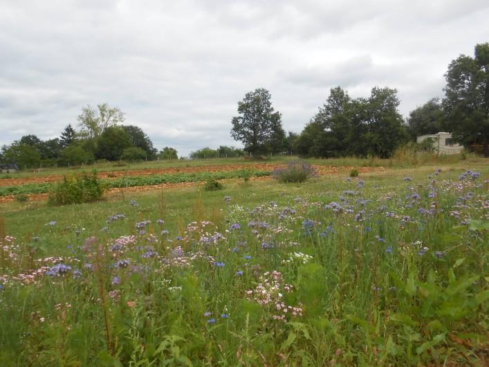 Location de vacances - Bungalow - Mobilhome à Le Buisson-de-Cadouin - Le jardin